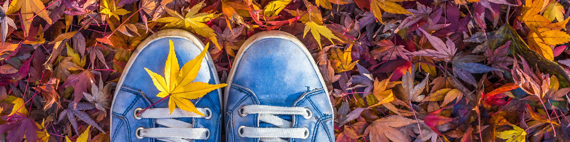 Autumn leaves and blue shoes